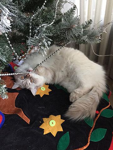 Meowy Christmas1.jpg