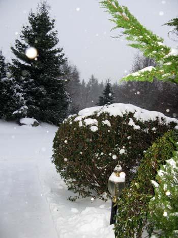 snowfalling.jpg